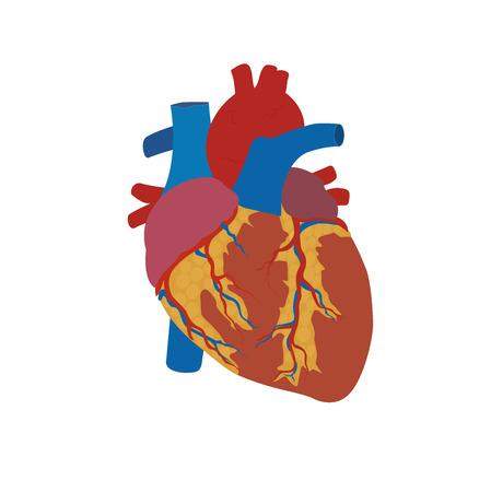 人間の心の概念、医療、ヘルスケア、フラット、ベクトル図では、テンプレートのスタイルします。