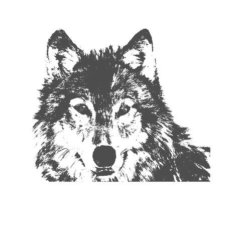 Wolf head vector Stock fotó - 55269217