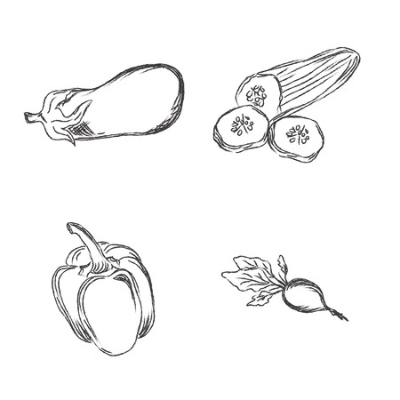 vector illustration of hand drawn vegetables in sketch style