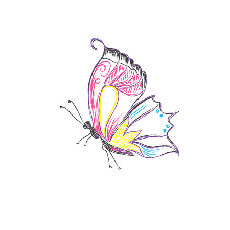 Beautiful, butterfly, vector,  sketch style Ilustrace