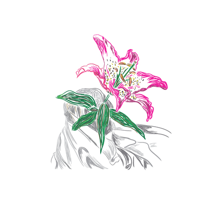 tiger lily: lily, sketch, vector illustration
