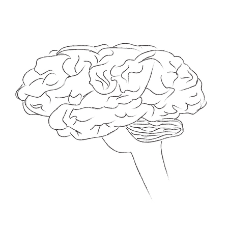 cortex: Brain, human, think, vector, illustration, sketch Illustration