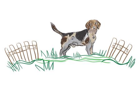 stance: vector sketch dog Beagle breed Illustration