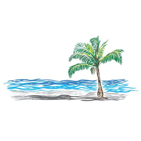 Paradise Palm, sketch, vector illustration