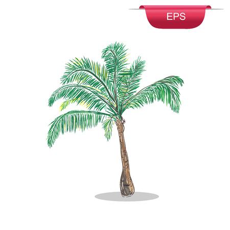 malibu: Palm tree tropical design element, sketch style, vector illustration