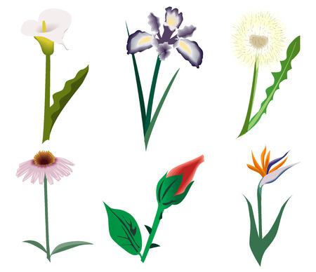Set of nice flowers