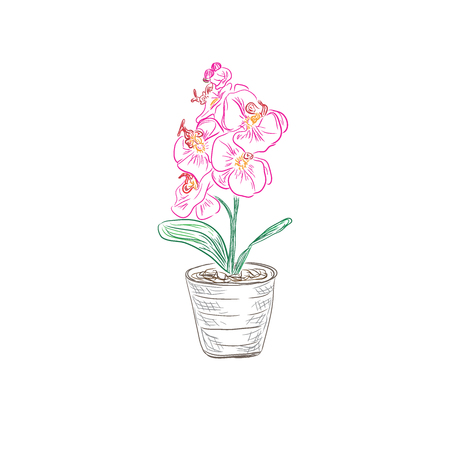 pink orchid: Pink orchid flowers in sketch style, vector illustration