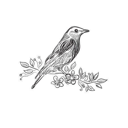 bird, sketch design, vector illustration
