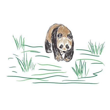 oso panda, el estilo de dibujo, ilustración vectorial