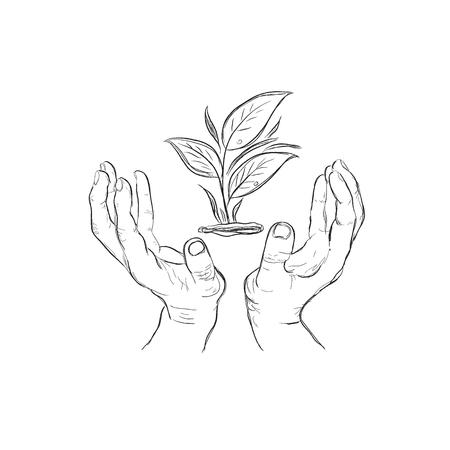 hands holding plant, sketch style, vector illustration Illustration