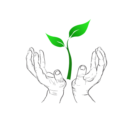 hands holding plant, eco concept, sketch style, vector illustration Illustration