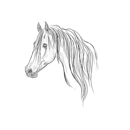 head of horse, sketch style, vector illustration