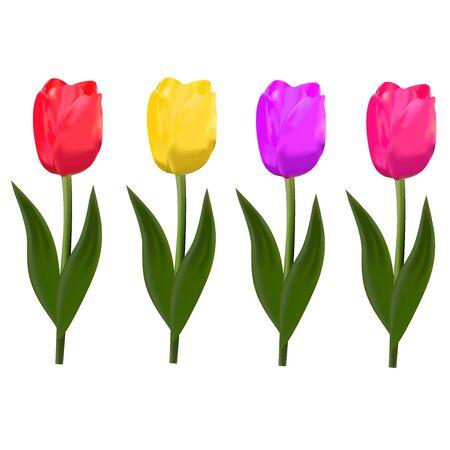 Tulipes isolées. vecteur Banque d'images - 69255647
