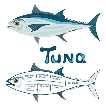 tuna, cuts, vector illustration Ilustração