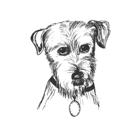 Dog in a sketch style illustration