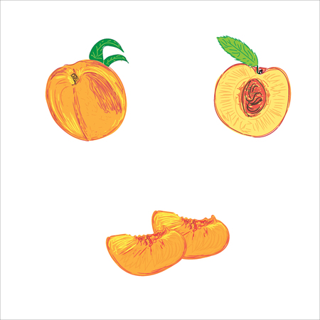 peaches in sketch style, vector illustration