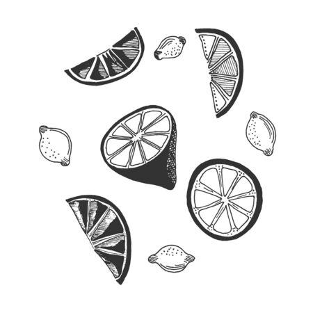lemon in sketch style, vector illustration