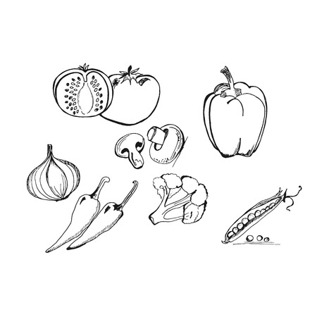Vegetables in sketch style, hand drawn vector illustration.