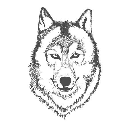Wolf, hand getrokken, schets, vectorillustratie