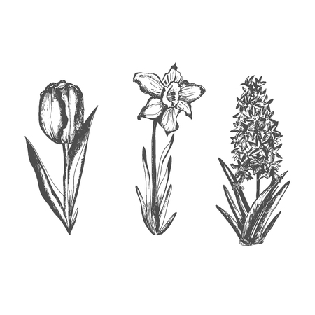 Hand drawn spring flowers. Sketch vector illustration. Illustration
