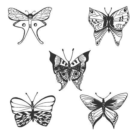 Butterfly, hand drawn vector illustration.