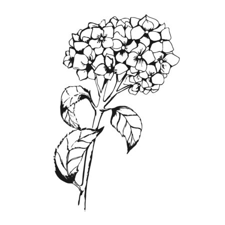 Flower in sketch style, vector illustration