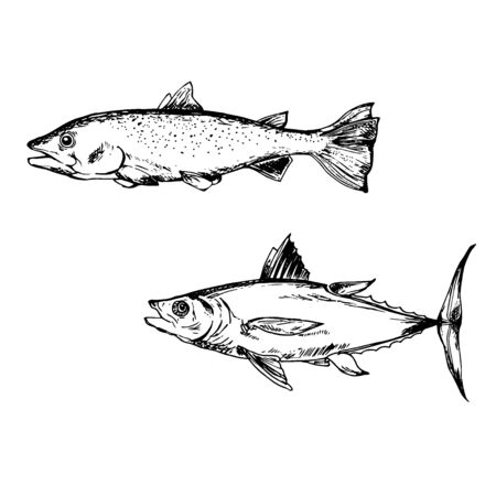 Sketch illustration of fish, tuna