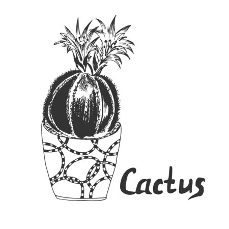 Cactus in sketch style, vector illustration  イラスト・ベクター素材