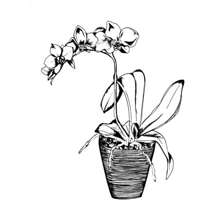 Orchids in sketch style, vector illustration  イラスト・ベクター素材