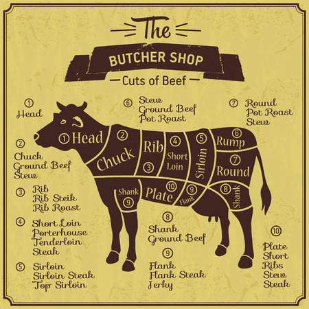 Butcher shop illustration of cow. Illustration