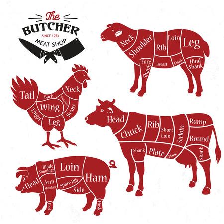 Fleischstücke. Diagramme für die Metzgerei. Tierische Silhouette. Vektorillustration. Vektorgrafik