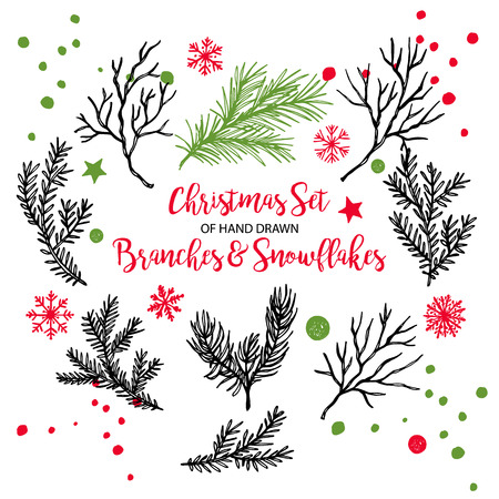 Hand drawn fir, pine cedar, coniferous branches. Christmas holiday winter plants for decoration. Vector isolated xmas design elements.