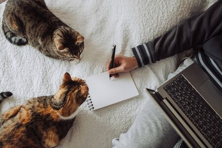 Hand of a person making a drawing or writing in a notebook while lying in bed with a laptop on his lap. Two cats nearby. Top view. Designer freelancer or work from home concept