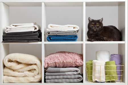 Towels, sheets, bedding and a cat on the shelf.