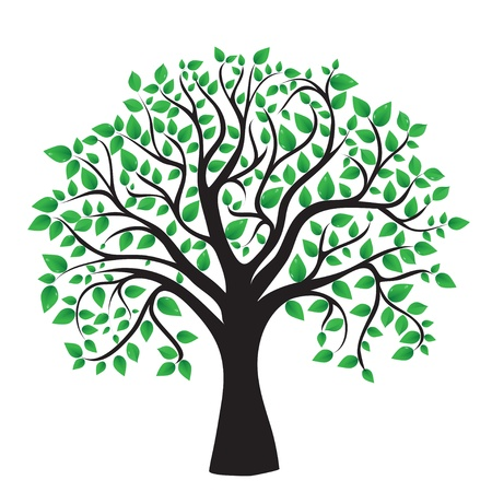 evergreen branch: �rbol aislado en un fondo blanco, vector