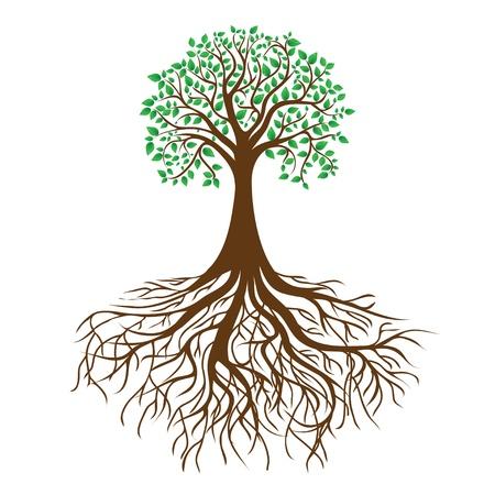 árbol con raíces y follaje denso Ilustración de vector