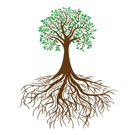 single tree: tree with roots and dense foliage  Illustration