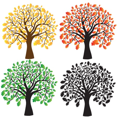 Four oak with yellow, red and green foliage  Ebony   Vector