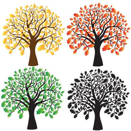 chene bois: Quatre ch�ne avec du jaune, �b�ne feuillage rouge et vert Illustration