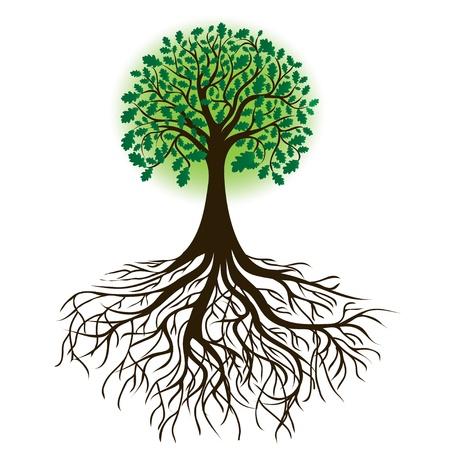 arbol raices: árbol de roble con las raíces y follaje denso