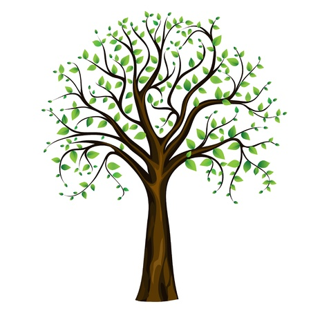 Spring tree on the white background, vector image Illustration