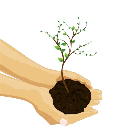 hands holding plant: Tree in palm of hand, vector image Illustration