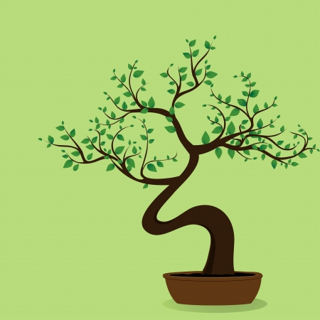 potted plant: Bonsai tree on the green background
