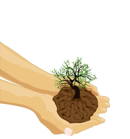 Tree in palm of hand  Vector