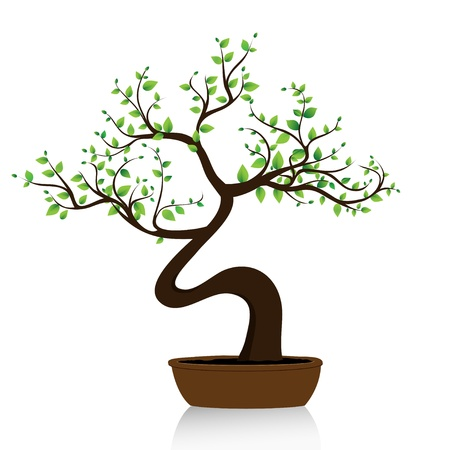 bonsai: bonsai tree on white background flower pot