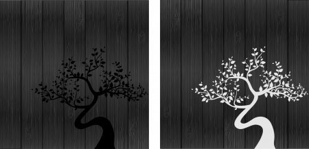 black and white tree silhouettes  photo