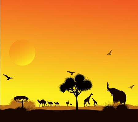 humped: animals and trees against a sunset in the desert,  Illustration