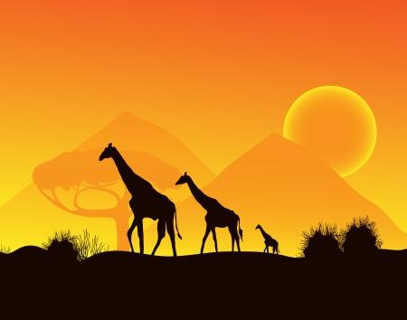 Giraffes walking across the desert,  Vector