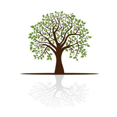 un arbre: arbre projette une ombre, une place pour le texte,