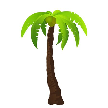 oasis: illustration of the palm tree